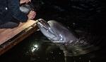 Секретный дельфинарий. Краснокнижные дельфины – в силосной яме?