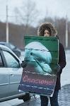 Спаси дельфина, закрой дельфинарий