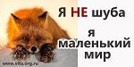 >Соцреклама за права животных в Волгограде