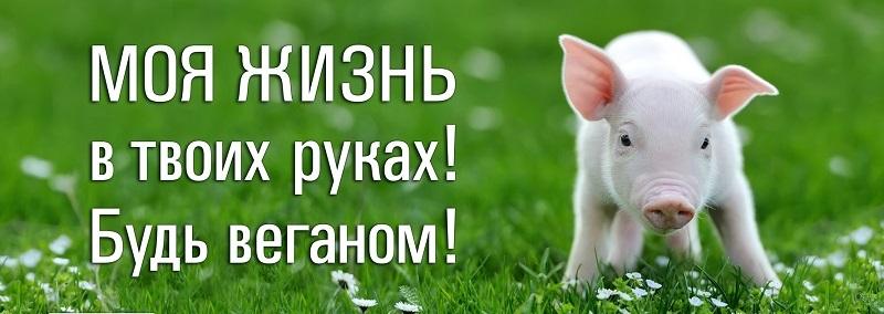 Веганская соцреклама «Животные – не еда!» ко Дню Вегана в России
