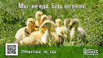 >10 декабря - Всемирный День защиты прав животных