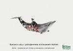 Зритель шоу с дельфинами оплачивает убийство дельфинов. Бойня дельфинов - прикрытие для отлова в океанариум и дельфинарий
