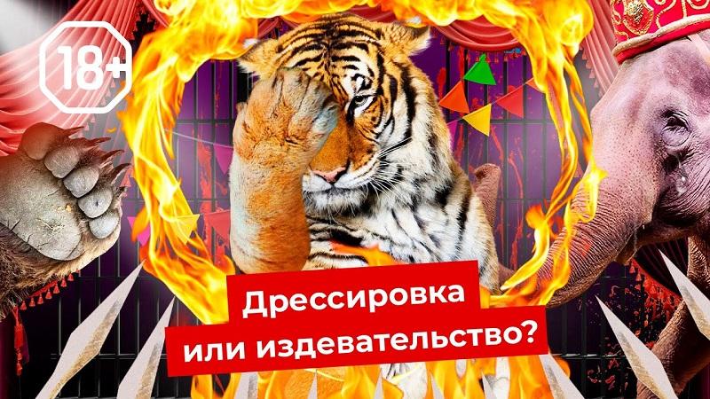 Шоу для извергов: цирки и дельфинарии нужно запретить | Как страдают животные. Varlamov