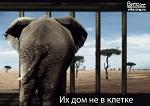 Владимира Путина попросили вмешаться в ситуацию со слонихой Эколь