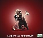 Спаси животных - закрой жестокий цирк в своей стране!