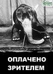Петиция против использования животных в цирках