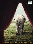 >Спаси животных - закрой жестокий цирк в своей стране!