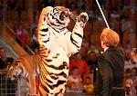 >Минсельхоз Чехии поддержал запрет цирков с животными