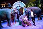 Пытки животных в цирках России