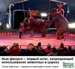 Нью-Джерси – первый штат, запрещающий использование животных в цирках