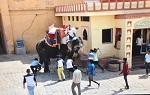 >Смертельные катания на слонах, или Слоны наносят ответный удар - ВИДЕО