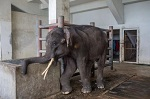 Смертельные катания на слонах - Слоны наносят ответный удар