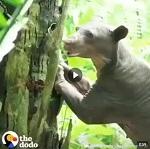 >Освобождение животных из цирка | ВИДЕО Спаси животных - закрой подлый цирк в своей Стране!