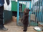 Освобождение животных из цирка
