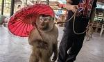 Невидимые страдания: изнанка туризма с дикими животными