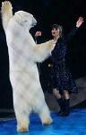 ВИТА направляет в Гепрокуратуру РФ обращение по ситуации с белыми медведями в России