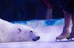 ВИТА направила в Гепрокуратуру РФ обращение по ситуации с белыми медведями в России