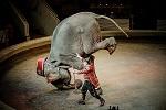 Самое длинное и изнурительное путешествие передвижного цирка в мире? Тропические животные в зоне вечной мерзлоты