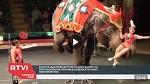 >Нью-Йорк празднует очередную победу защитников животных - запрет использования слонов в цирках! (ВИДЕО ДНЯ)