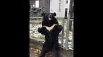 Будни цирка. Циркачи привязали медведя к забору поликлиники для рекламы цирка