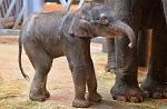 >Студенты Донского университета обратились к ректору с просьбой спасти из цирка слоненка Эколь</a>          border=
