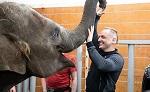 Студенты Донского университета обратились к ректору с просьбой спасти из цирка слоненка Эколь