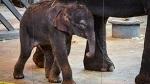 Открытое обращение российских звёзд к ростовскому губернатору с просьбой спасти слоненка из цирка
