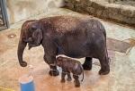 Студенты Донского университета обратились к ректору с просьбой спасти из цирка слоненка Эколь</a>