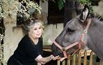 >Брижит Бардо призвала Путина вмешаться в судьбу проданного цирку слоненка