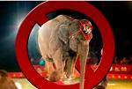 >Зоозащитники выступили против господдержки цирков-шапито. Комментарий ВИТЫ Федеральному агентству новостей (ФАН)
