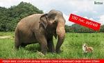 >Афера века: слон по цене Моськи. Об этом стоит узнать всему миру!