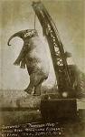 """>""""На радость публике"""": как в истории казнили неповиновавшихся цирковых слонов"""