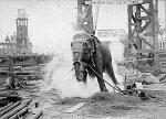 """Цирк убивает слонов. """"На радость публике"""": как в истории казнили неповиновавшихся цирковых слонов"""
