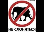 >У вас по улицам еще не водили слонов? Если водили - подавайте в прокуратуру! Образец заявления