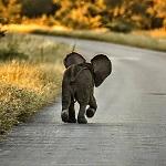>Всемирный день защиты слонов от цирков, зоопарков и охоты - ВИДЕО