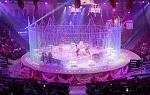 >От судьбы не уйдешь: помпезное открытие Саратовского цирка после 3-летней реставрации завершилось... очередной дракой львов на арене