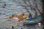 Невольники:  в бухте Тайцзи гринды окружены рыбаками, вскоре «самых красивых» отберут, чтобы продать для содержания в неволе, а остальных убьют или освободят, но вряд ли они выживут в океане самостоятельно