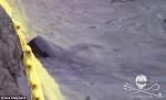 Замученный: дельфин, которому, по-видимому, повредили позвоночник металлическим штырём, спасся, но рыбаки снова его настигли. Его кровь окрашивает воду в красный цвет, пока он умирает в бухте.
