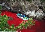 Изуверы: вода в бухте становится красной из-за крови животных, убитых в бухте (фото из архива)