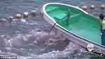 Медленная смерть: гринда мечется из-за невозможности поднять голову над водой, через несколько минут она утонет