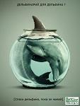 >Дельфинам не место в торгово-развлекательном центре - активисты выступают против дельфинария в Астане
