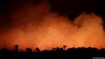 Причина пожаров в Амазонии - животноводство