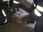 Гуманных капканов не бывает! Девушки спасли куницу от мучительной смерти