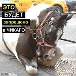Городской совет Чикаго проголосовал за запрещение конных экипажей