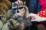 >ВИТА призывает включиться в борьбу за полный запрет контактных зоопарков/ Эксперты оценили, насколько опасны и губительны для людей и животных контактные зоопарки - РЕН ТВ
