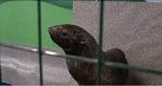 >Суд не исполнил желание контактного зоопарка получить с зоозащитников девять миллионов | ВИДЕО