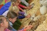 >Как устроены контактные зоопарки и Почему их требуют закрыть. Комментарий ВИТЫ
