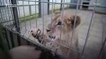 Контактный зоопарк: незаконно, жестоко, опасно