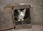 Замурованные кошки в подвалах