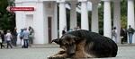 В Севастополе острый конфликт из-за отсутствия приюта для животных